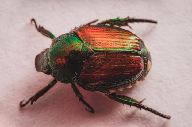A picture containing insect  Description automatically generated