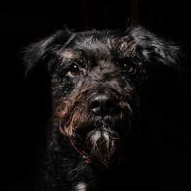 Being loved by Carey Lee - Animals - Dogs Portraits ( pet, loved, dog, black, animal )