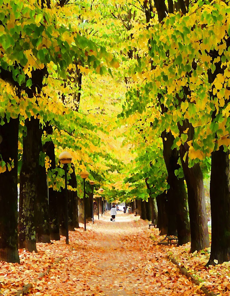 """""""Avenue of Plane Trees"""" di Isabelle Dupuy  di Justinawind"""