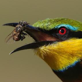 Catch by JD Lotz - Animals Birds