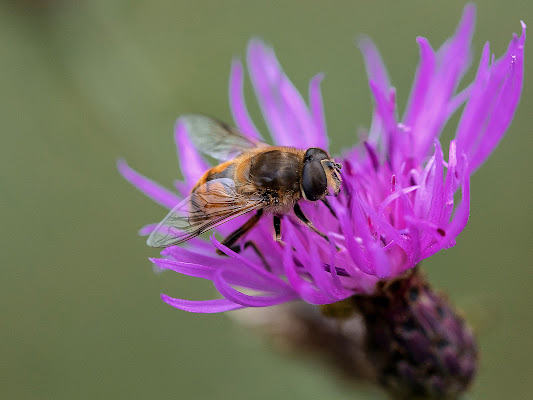 sul fiore di alber52