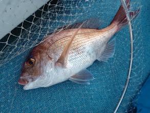 Photo: 最後に真鯛キャッチ。