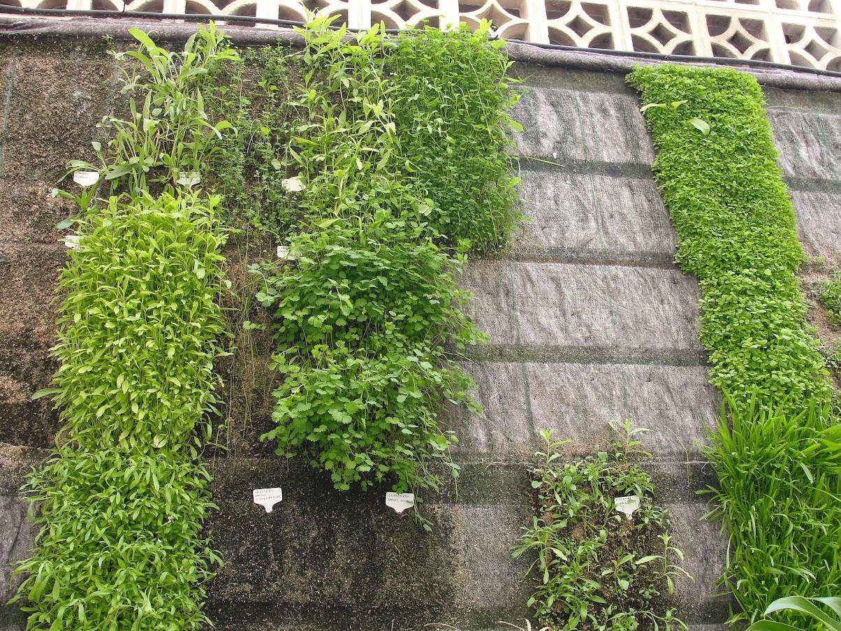 Prueba del jardin LeafSkin de diferentes especies