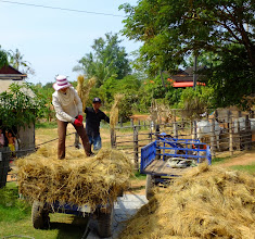 Photo: Off loading the harvested rice