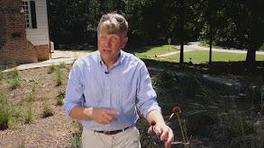 Rediscovering Catesby's Carolina, Part 2 thumbnail