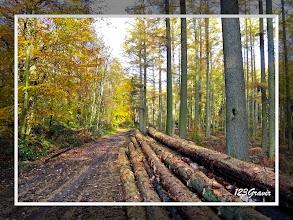 Photo: Exploitation forestière au Bois l'Abbé