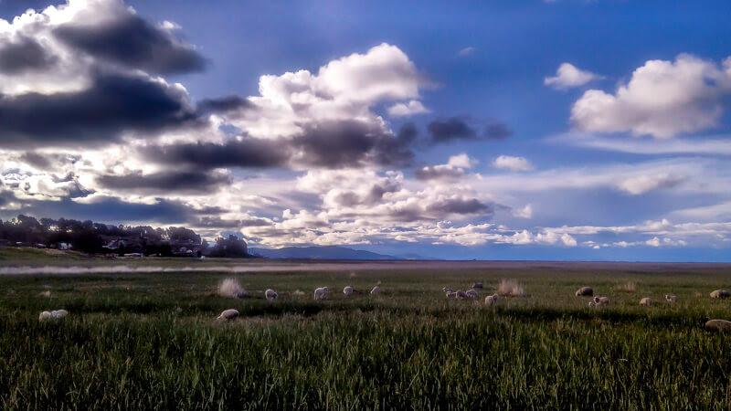 sheeps+grazing+silver+lining+isla+de+ Amantaní +lago+titicaca+puno+peru+south+america