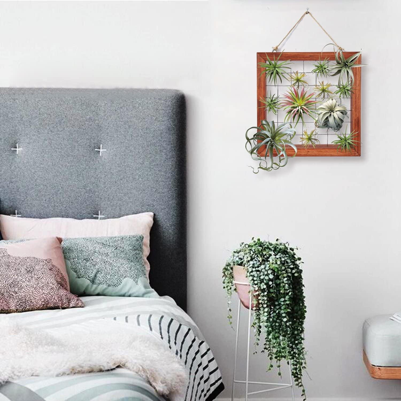 DIY Air Plants Wall Art