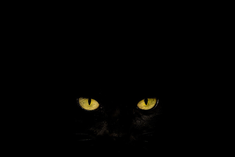 Black Cat di Alan_Gallo
