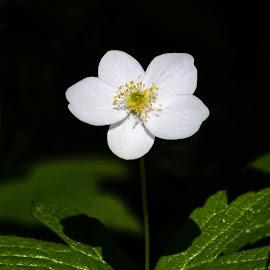 Flower by Dave Lipchen - Flowers Flowers in the Wild ( flower )