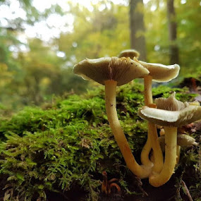 by Poli Paunova - Uncategorized All Uncategorized ( autumn, green, mushrooms )