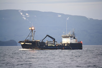 "Photo: A boat  I saw Salmon tendering, one of the crab boats"" Incentive"" out of Kodiak"