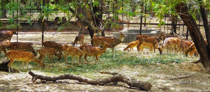 deer-park-Hauz_Khas