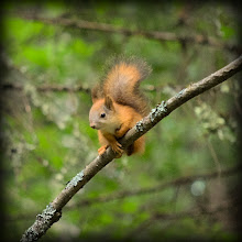 Photo: Baby squirrel on a branch