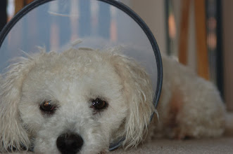 Photo: March 18: Sad about the collar