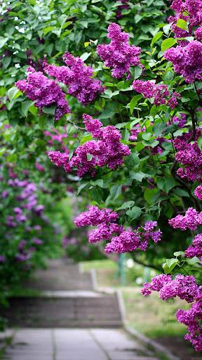 Download Garden Live Wallpaper Hd Flower Background 3d Free For Android Garden Live Wallpaper Hd Flower Background 3d Apk Download Steprimo Com