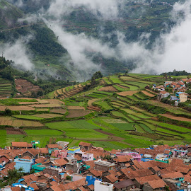 Village and farming by Karthikeyan Chinnathamby - Landscapes Mountains & Hills ( hill, mountain, green, nature, kodaikanal, farming, asia, india, travel, village, life, mist )