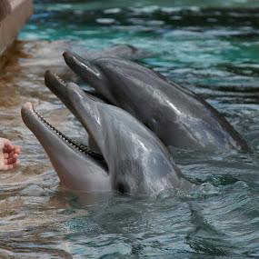 Feeding the dolphins by Matt Stevens - Animals Sea Creatures