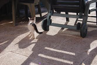 Photo: SUMATRA MONTEGANCEDO*ES - Enero / January 2009