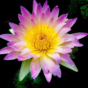 Atlanta flower 2 by Russ Crane - Nature Up Close Flowers - 2011-2013 ( nature, atlanta, botanical, garden, rain, flower )