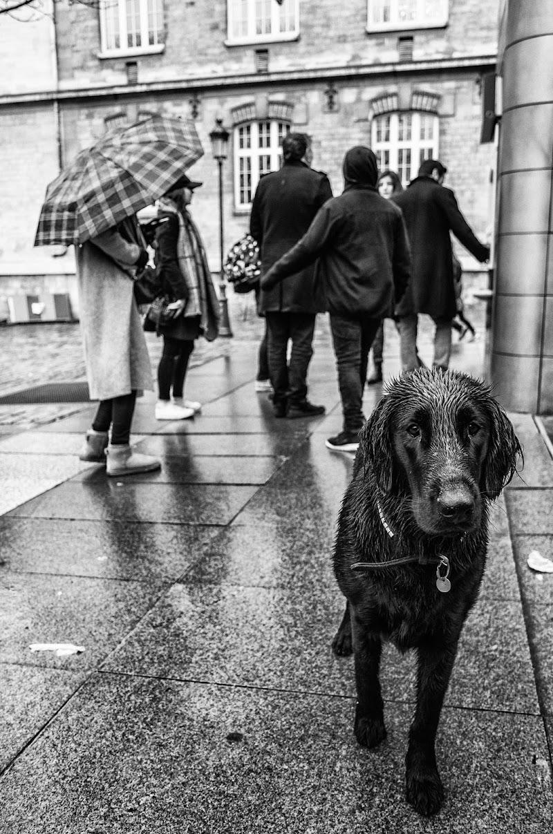 under the rain  di Jackass1991