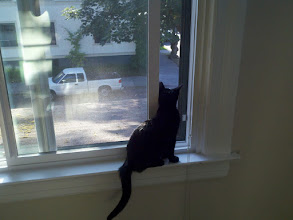 Photo: Took this the day Fred and I moved into the apartment. He was freaked out by all the change, but he soon adjusted.