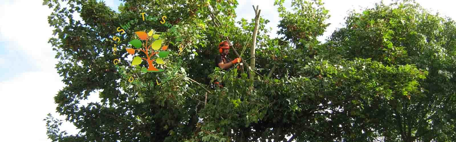 Tree services worcestshire