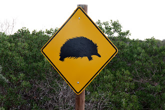 Photo: Year 2 Day 225 - An Echidna Sign