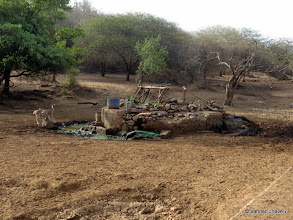 Photo: The one spot Hub for quenching thrust for local Maldharis, peacocks deeers, langoors and the Lions
