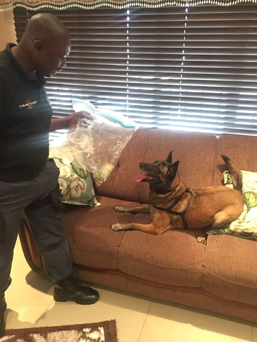 A police office takes his dog through a south Durban home where four people were arrested for alleged drug dealing.