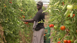 Imagen de archivo de un trabajador en un invernadero almeriense.