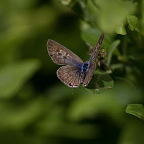 Buttterfly by Maya Bar - Animals Insects & Spiders ( green leaves, butterfly,  )