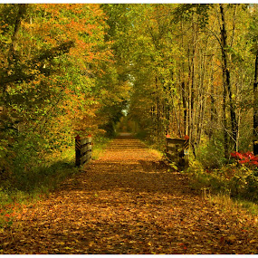 A Walk To Remember  by Michael Priest - Landscapes Forests ( wisconsin, fall, landscape )