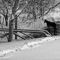 Horse di