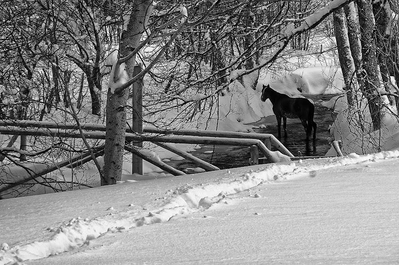 Horse di Yasis