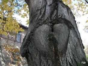 Photo: Pikáns fotó egy fáról