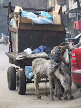 Photo: There's always a job for a trash collecting donkey.