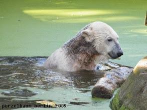 Photo: Knut hat Spass mit dem Holzteil :-)