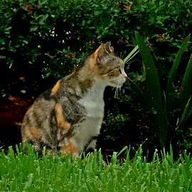 by Melissa Cazarin - Animals - Cats Portraits