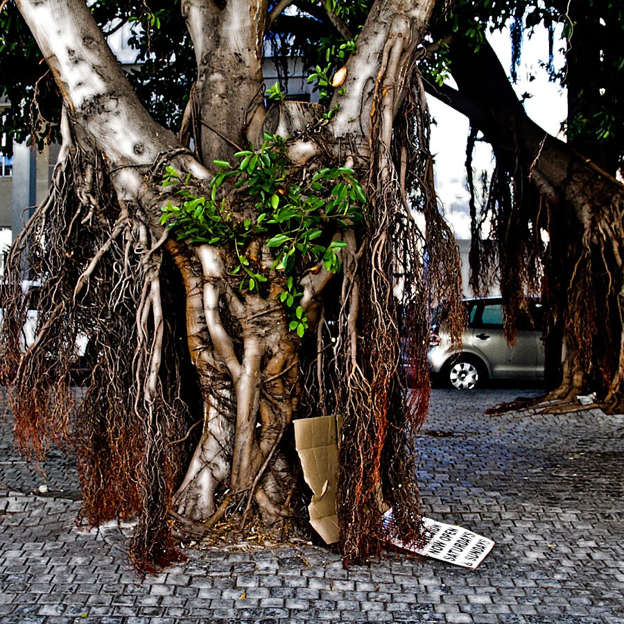 live a long time by Magdalena Wysoczanska - Nature Up Close Trees & Bushes ( solid, urban, old, nature, tree, roots, branches, time scars )