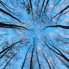 Trees from below by Federica Violin - Nature Up Close Trees & Bushes ( nature, trees, bosco )