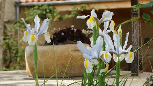 La Fermette gîte 3 étoiles à Surgères près de La Rochelle au jardin les iris