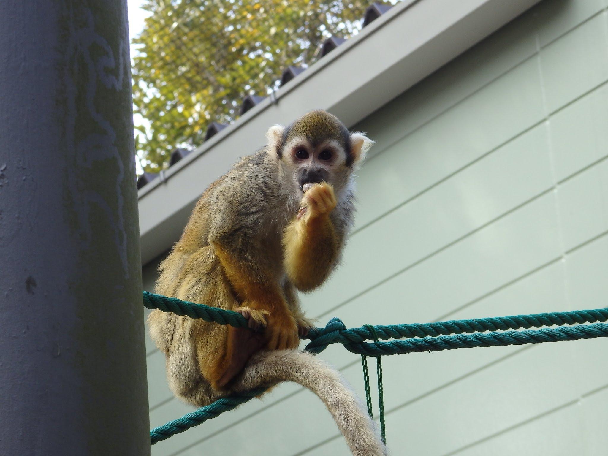 大牟田市動物園7