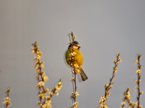 Photo: Priorslee Lake Unintentional but it has some charm. The camera was mis-set to 'High Definition' when it takes three shots at different exposures and merges the results. Here we see a slightly blurred Blue Tit with its 'shadow'. (Ed Wilson)