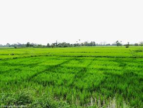 Photo: #002-Les rizières en Birmanie.