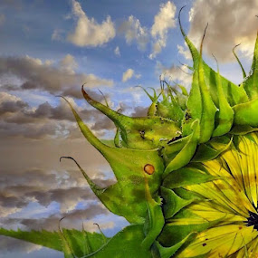 Blue skies and sunflower by Pamela Hammer - Illustration Abstract & Patterns ( abstract, sky, illustration, sunflower )