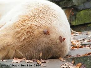 Photo: Knut ist herbstlich geschmueckt ;-)