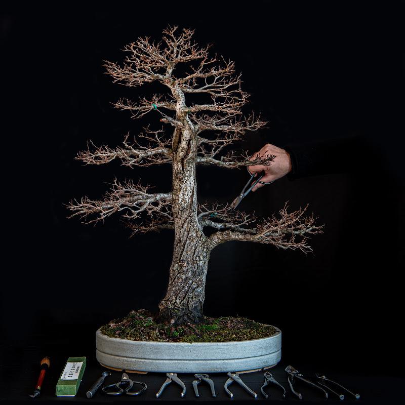 il mio hobby: l'arte di coltivare un bonsai  di loredana de sole