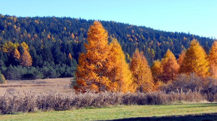 Tocchi d'autunno di Anthon84