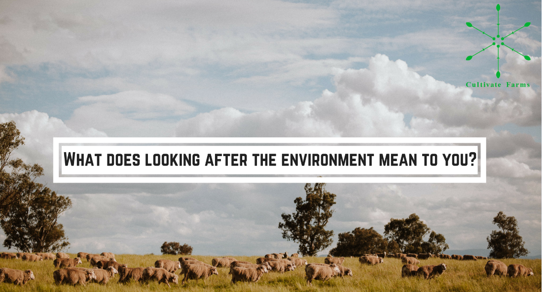 What does looking after the environment mean to you?